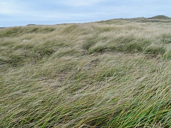 Ocean Shores, Ουάσιγκτον: the grass before the water