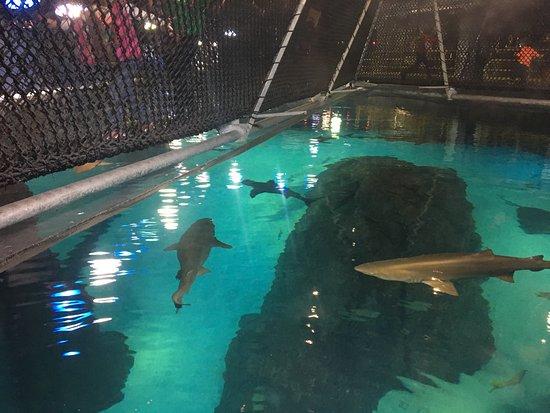 Adventure Aquarium: Aquarium