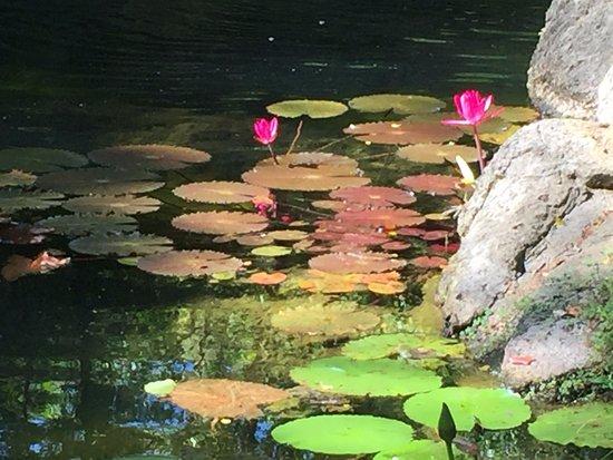 Kilauea, ฮาวาย: Pond in Japanese garden