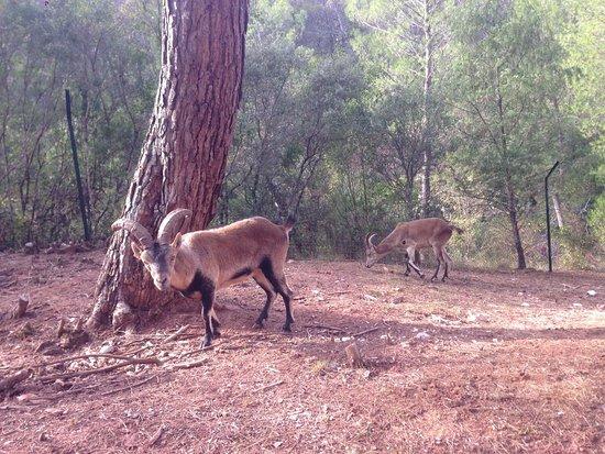 Hornos, Spain: Parque Cinegético Collado del Almendral