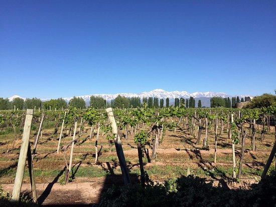 Cavas Wine Lodge: View from Vineyard Villa
