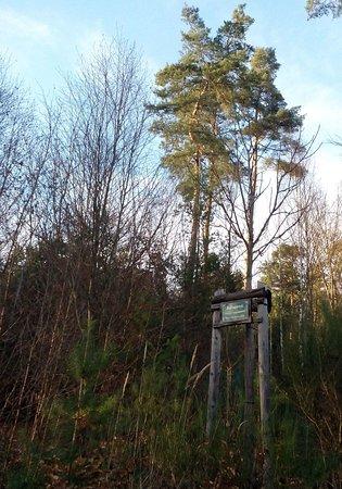 Wildpark Betzenberg In Kaiserslautern Picture Of Wildpark