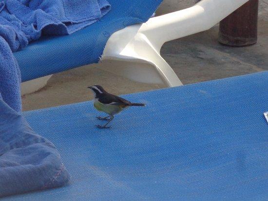 """Kiteboarding at Decameron Marazul : Luego de los snacks libres, aprovechan las """"migas"""""""