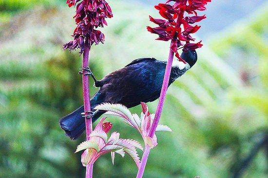 มาร์ลโบโรห์, นิวซีแลนด์: Bird life around Raetihi Lodge