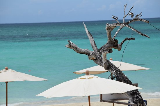 Beautiful Ocean Views beautiful ocean views - picture of negril tree house resort