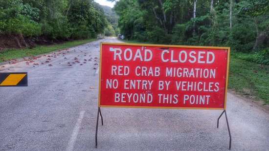 christmas island national park it s crab migration time caring for the unique christmas island