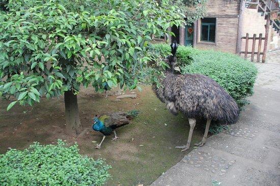 Mt. Tazi Park: Bird park (ostrich)