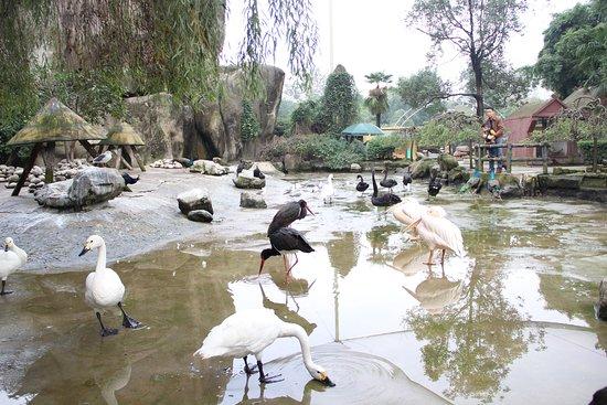Mt. Tazi Park: Bird park