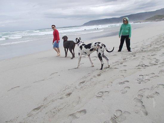 "Hermanus, Sudáfrica: Scenic ""Grotto Beach""."