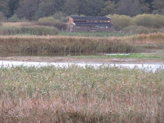 Westleton, UK: Another scrape hide