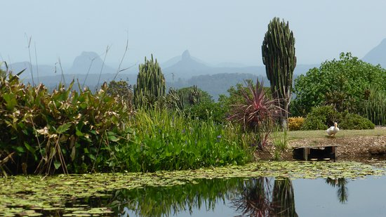 Maleny, Australia: Just one of the beautiful ponds with the Glass House Mountains in the background