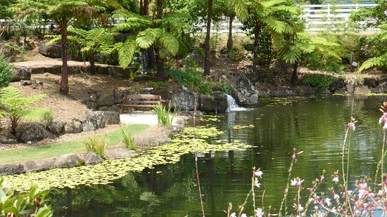 Maleny Botanic Gardens Bird World Tropical Pond With Waterfall And Attractive Plantings