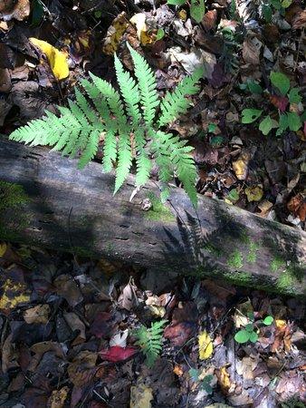 Jackson, MO : Nature Trail at Visitors Center