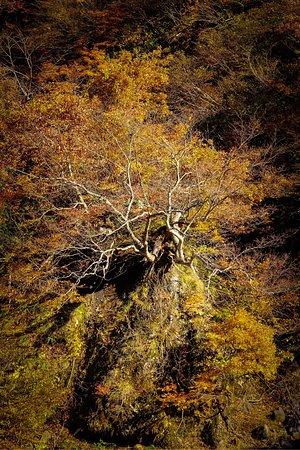 Kiyotsu Gorge: photo2.jpg