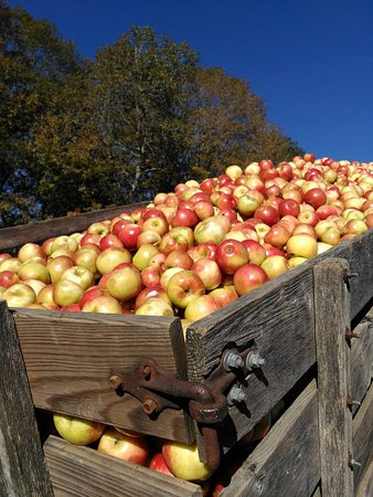 B.F. Clyde's Cider Mill : Apples ready to be pressed