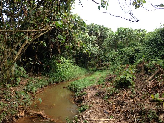Central Region, أوغندا: Resort grounds
