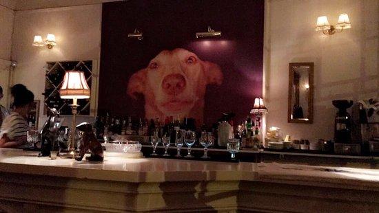 The Dogs : photo0.jpg