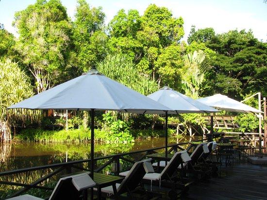 Sepilok, Malaysia: Tumbonas de bar