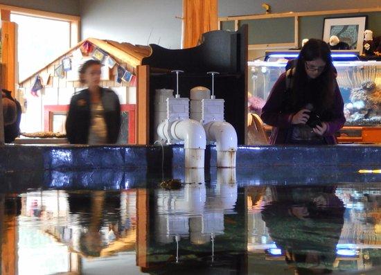 Ucluelet Aquarium: Viewing pool