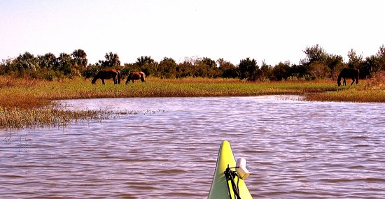 Fernandina Beach, FL: You can easily see the wild horses near the shore.