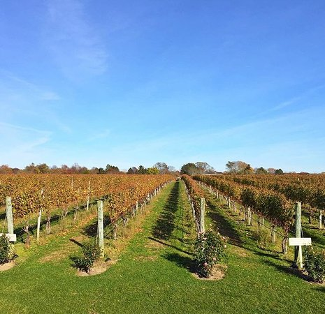 Sagaponack, Estado de Nueva York: Vineyard !
