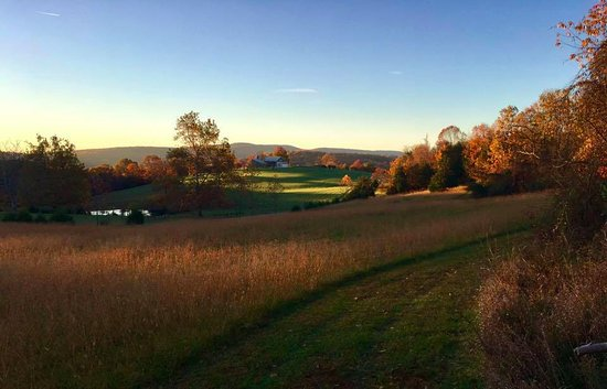 Keedysville, MD: sunrise side of Antietam Overlook B&B, pathways mowed for superb walks