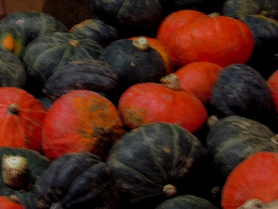 Newfane, VT : Colorful squash or pumpkins.