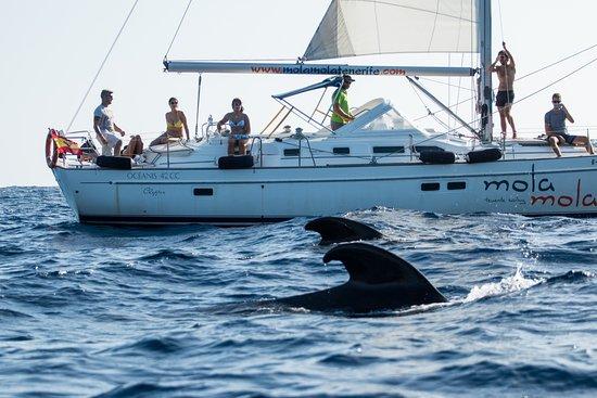 Mola Mola Tenerife Sailing