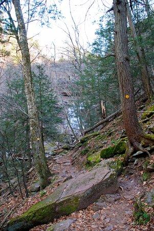 Haines Falls, NY: Trail to falls