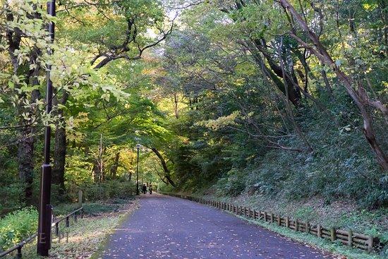 Higashimurayama, Japan: 狭山公園の歩道
