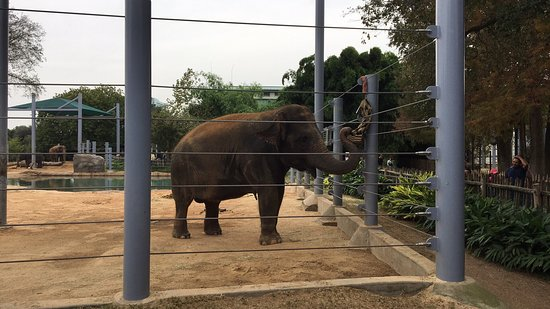 Houston Zoo: photo0.jpg