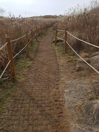 Changnyeong-gun, Korea Selatan: 화왕산과 화왕산 억새길