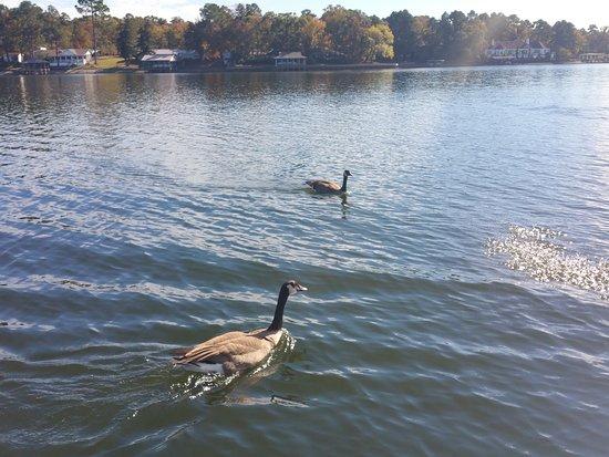 National Park Duck Tours : 20161113_130914_large.jpg