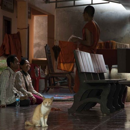 angkor wat photography workshops and tours no that cat is not photoshopped into the