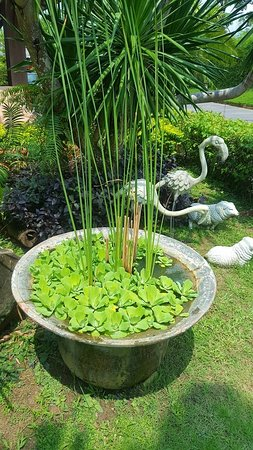 Foto de Mai Morn Resort
