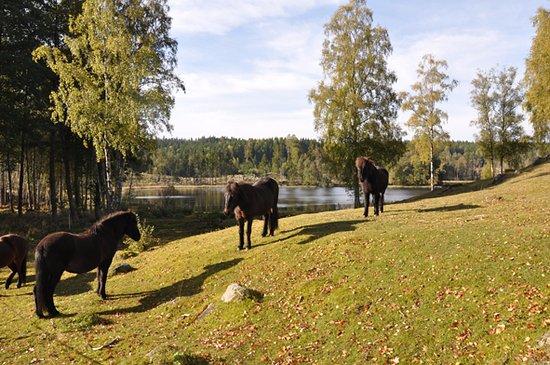 Gislaved, Schweden: Boberg till Hägnabacken