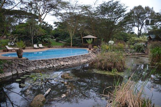 Wildebeest Eco Camp Picture