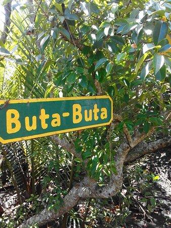 Buta-buta