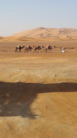 Sahara Garden Photo