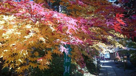 Wakamatsu-ji Temple: どうです、この美しさ