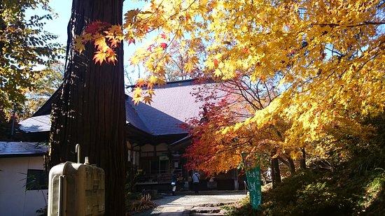 Wakamatsu-ji Temple: イチョウもあります