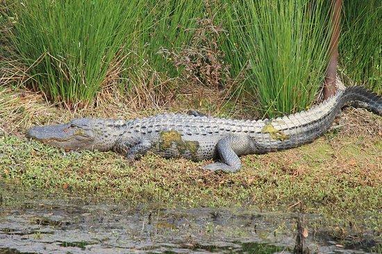 North Augusta, Carolina Selatan: FB_IMG_1479129928240_large.jpg