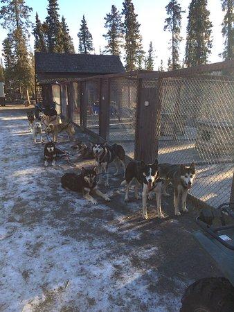 Sled Dog Demonstration: photo1.jpg