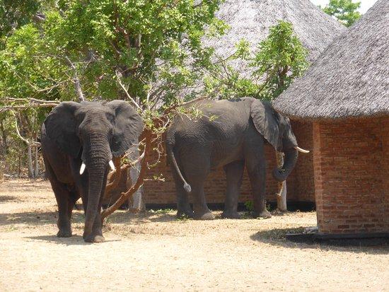 Lifupa Conservation Lodge Photo