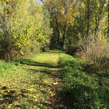 Il sentiero, addentrandoci nella riserva