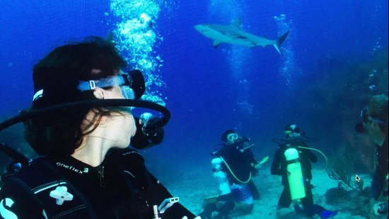 Ocean Explorers Dive Center