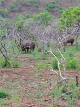 Mkuze, South Africa: Black rhinos!!!
