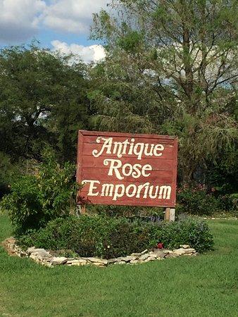 Brenham, TX: Antique Rose Emporium