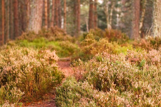 Grantown-on-Spey, UK: Anagach Woods