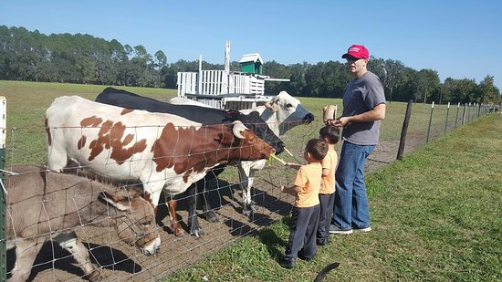 Elkton, FL: Farm Fun!